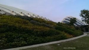 Singapore-wp-0021